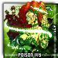 Imagen de poisonivy